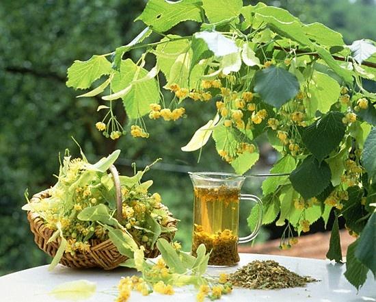 Травочки-залеталочки))) А если серьезно, то травы, помогающие забеременнеть